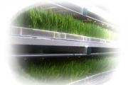 Forraje verde hidropónico - ¿Qué es el forraje verde?